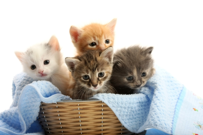 Small kittens in straw basket